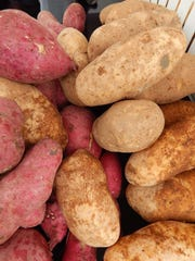 Large russet potatoes are great in mashed potatoes. They are sold alongside fresh turmeric and ginger root at the Nathan's Farm booth at the Westlake Village farmers market.