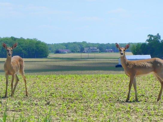 4 MNCO 0301 Dick Martin on the complexities of managing Ohio's deer herd 4.jpg