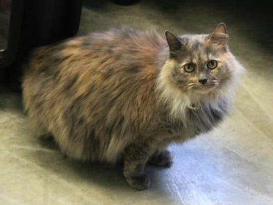 Pet of the Week: Luna