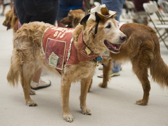 Dogs wear outfits to ask for donations during the 2013