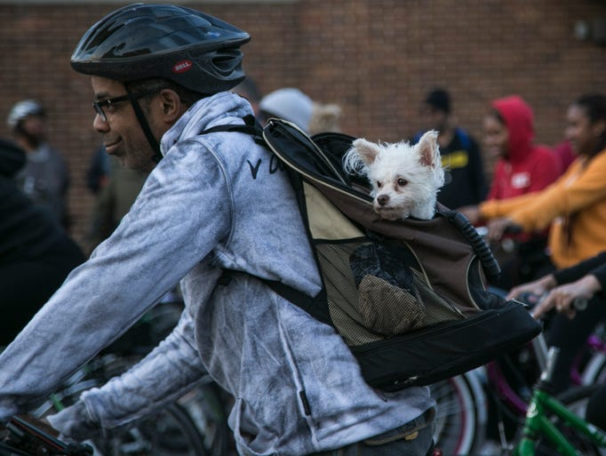 A dog peeks out of a backpack as bikers take off down