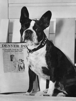 "Right, Sonny Boy, ""The Talking Dog of Reno"" poses with the article about him in the Denver Post, 1949."