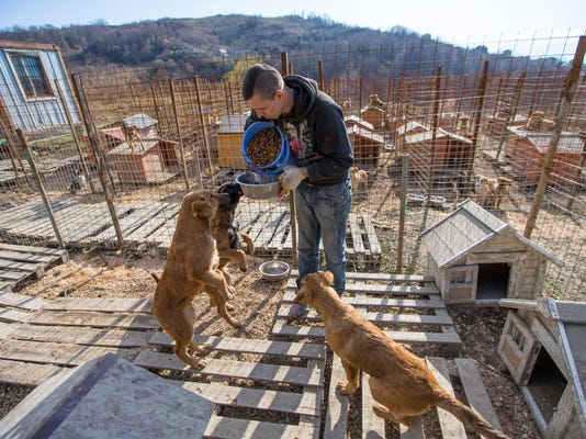 2014-1-2-6 stray dogs 4
