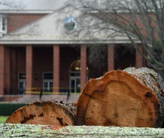 Q&Amy: Trees coming down at Furman