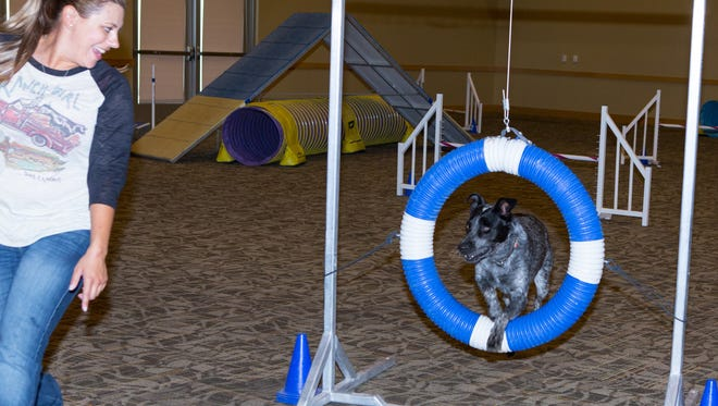 Tilley jumps through the hoop for her owner Kelli Younkers at the DogCruces Pet Expo held at the Las Cruces Convention Center on September 9, 2017.