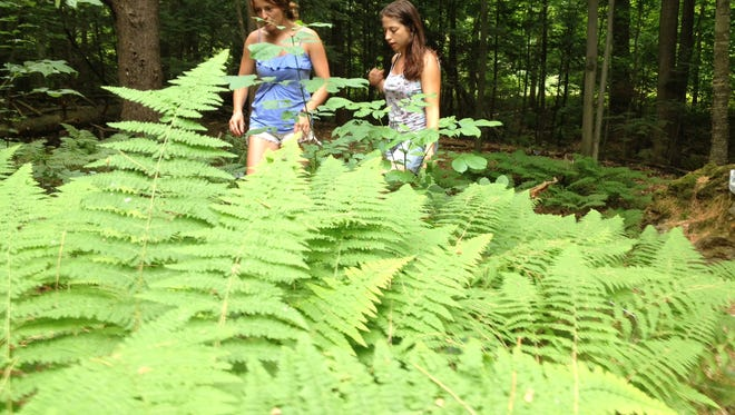 Suzie Stone, left, of South Burlington and Kim Rich of Burlington, at the Skinner fern collection. The women are students in the UVM farmer training program and who on a recent foraging lesson learned to identify chanterelles, Indian strawberries and other plants near the ferns.