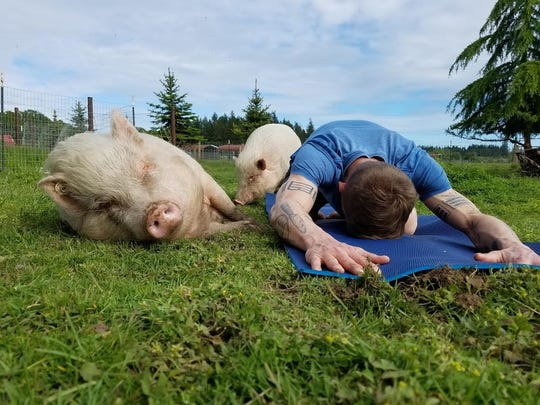 Pig Yoga is always a popular event at Lighthouse Farm Sanctuary