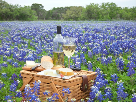 Bluebonnets in Texas.