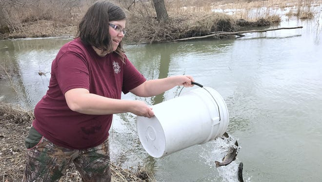Volunteer Katrina VanGalder, of Elmira, dumps a bucket of brown trout into Sing Sing Creek in Big Flats in late March 2017.