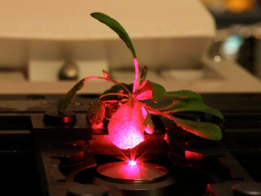 Plant pollution detector