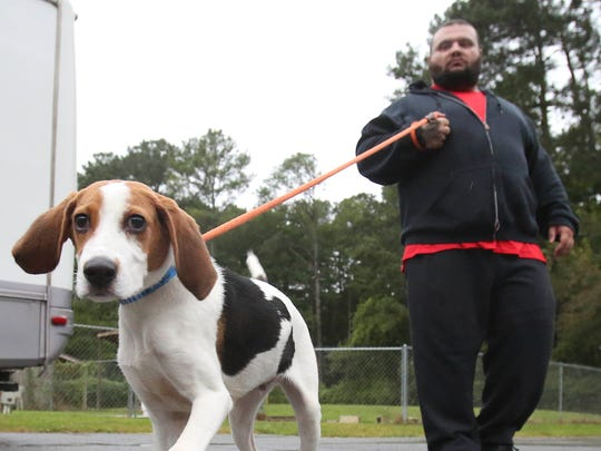 Cash, a beagle mix, is walked by Rejon Vilpido as a dozen dogs from Louisiana are received at the Georgetown facility of the Brandywine Valley SPCA on Saturday. The dogs, airlifted to make way for an increase of hurricane-displaced pets, are available for adoption.
