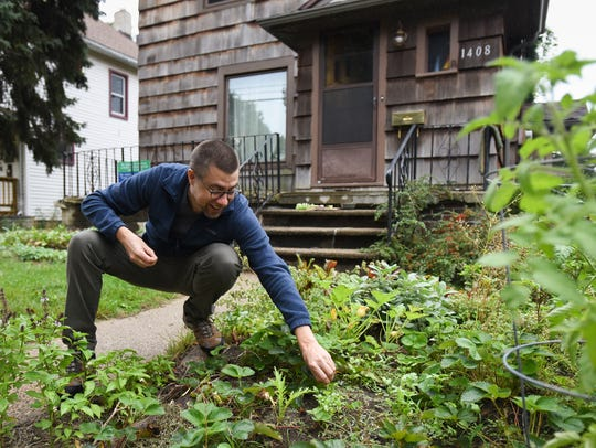 East side resident Chris Thompson pulls a radish from