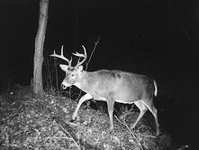 Chippewa tribal night deer hunt approved