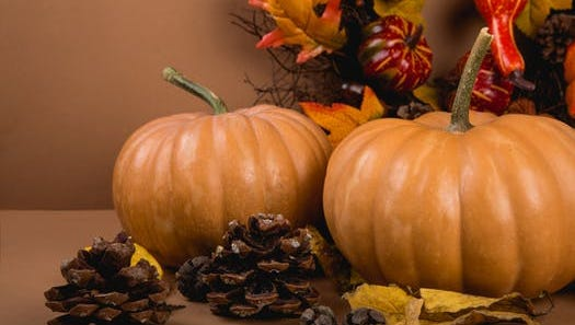Fall brings a lot of warmth and festivities, one of the biggest ones being Thanksgiving.