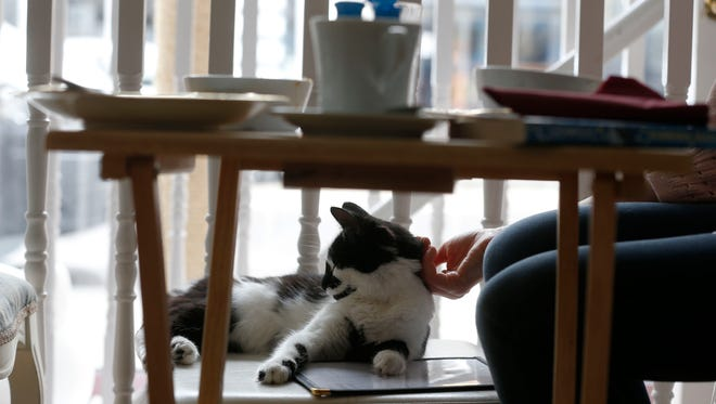A visitor strokes a cat in the newly opened Lady Dinah's Cat Emporium in London on April 4, 2014.