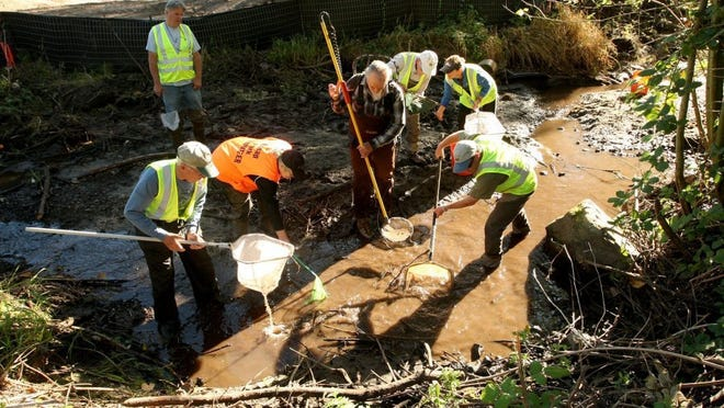 Frank Staller (center), of the Wild Fish Conservancy, uses a device to stun fish as volunteers gather around with nets to scoop them up during Tuesday's fish capture in Clear Creek.MEEGAN M. REID / KITSAP SUN