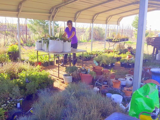 A pavilion is full of plant waiting for customers to benefit the shelter.