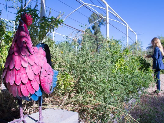 San Diego Farm Garden By Owner Craigslist Autos Post