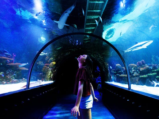 Shreveport Aquarium