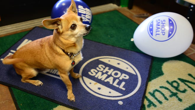 Toovie, an 11-year-old Chihuahua, and Nature's Pet Market in South Salem are ready for Small Business Saturday.