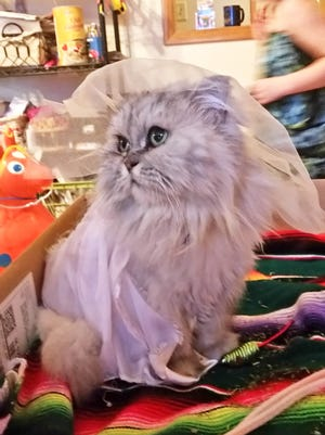 Brady Gluba, 10 said his cat, Silver, was well behaved during her wedding in late March.