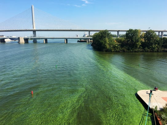 Algal blooms on the river in downtown Toledo on Sept. 23, 2017.