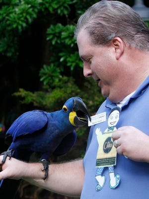 Murphy the 10-year-old Hyacinth Macaw gives Buzzy Ford's name tag a taste Monday at the Everglades Wonder Gardens Open House event to benefit the Bonita Springs attraction.