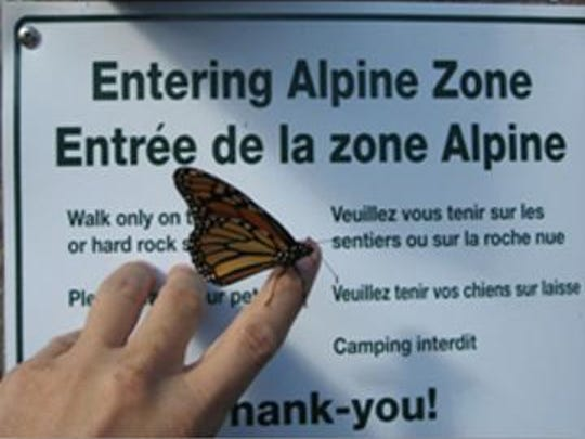 "Hiking to the peak of Mount Marcy becomes steeper and steeper, as this sign informs visitors of ""Entering the Alpine Zone."""