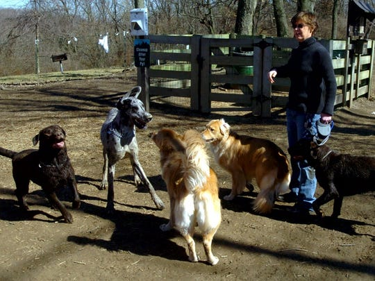Carrie Eheman, of Covington, is surrounded by dogs