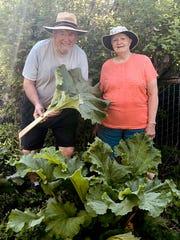 Ralph and Karleen Tyksinski still grow rhubarb, which