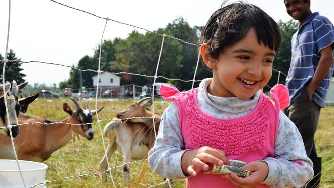 Jeevana Dhaurali, 2, and Vermont Goat Collaborative farmer Kul Dahal on Goat Choosing Day at Pine Island Farm in Colchester on Saturday.