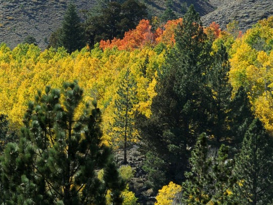 Fall along Highway 88 near Hope Valley, Calif.