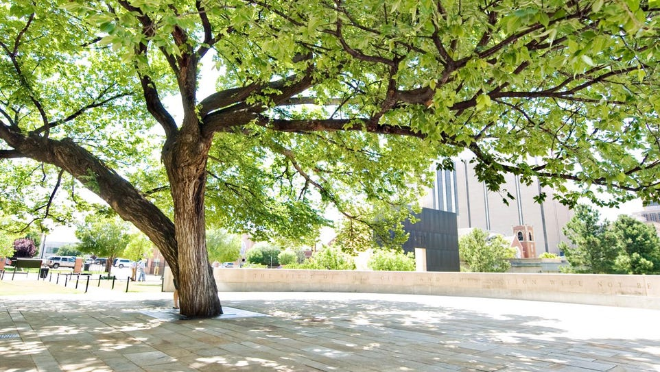 The Survivor Tree, an American elm left standing after