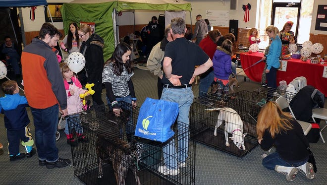 Dogs get to visit with prospective new families at the Pets for Vets event. The second annual event is Saturday, March 25 at the Wayne Ford Civic League.