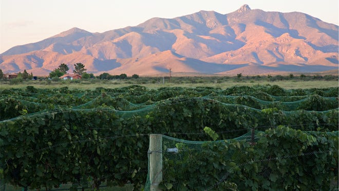 The view from the vineyards at Pillsbury Wine Company, where the harvest festival will be held.