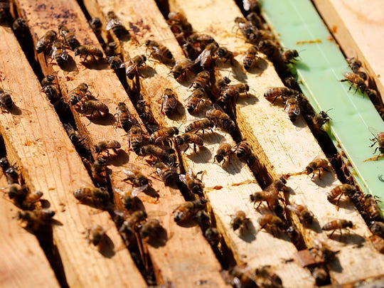 Honey bees from one of Jim Knowles' hives crawl on the sides of frames Thursday, after the top of the box the hive is housed in is taken off.