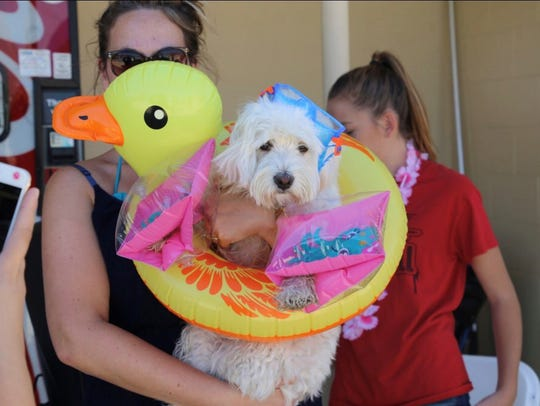 Fort Bliss will have its third annual Doggy Swim Day