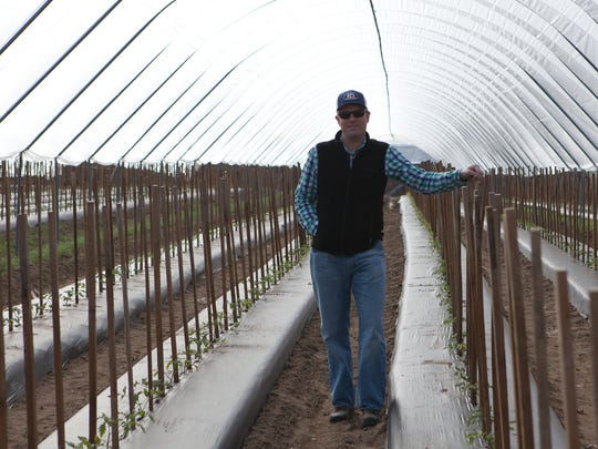 Mike Fennemore shows how Fifer Orchards helps young tomato plants get a jump on nature by planting them in a covered tunnel.