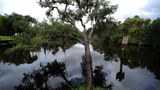 An oak tree hangs outward over Ten Mile Creek, a tributary of the North Fork of the St. Lucie River, as it flows past the southern point of White City Park in Fort Pierce.