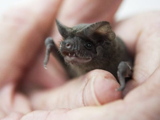 The Fascinating World of Bats, part of the EcoTALKS speaker series, is this weekend at the Environmental Learning Center in Vero Beach.