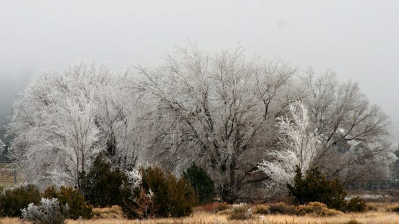 These trees in east Flagstaff are covered in delicate, crystalline frost as a dense gray fog swirls in the background.