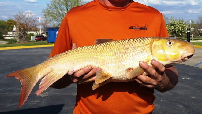 Dan Schmitz caught this 9-pound, 13-ounce state-record river redhorse at Tavern Creek near St. Elizabeth on April 15,