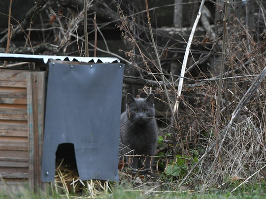 This feral cat appears to have a shelter in a lot on the north side of downtown Mansfield.