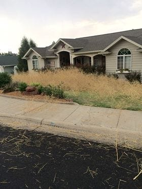 Saturday evening winds blew hundreds of tumbleweed in to the Skyline area in north Great Falls.
