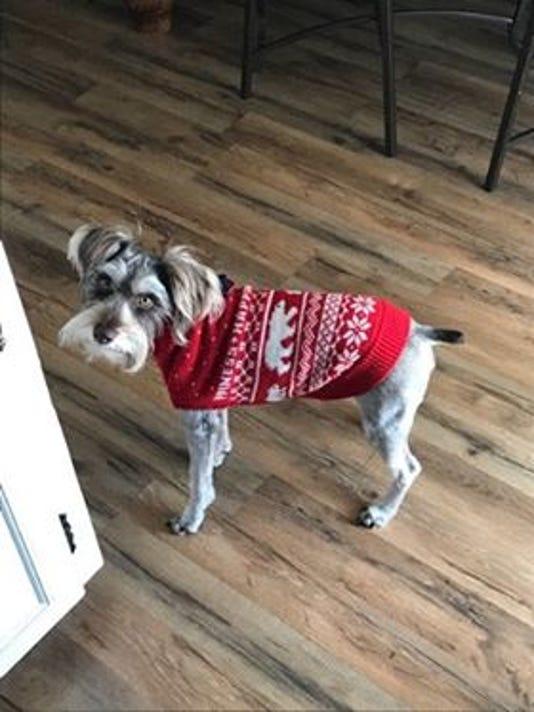 Pets in winter gear