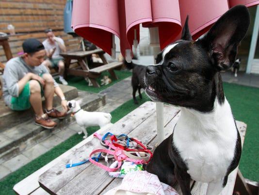 South Korea Dogs Dyin_Atki.jpg