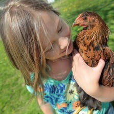 Caroline King shows her chicken, Lacy Chirp (nicknamed Roadrunner), Tuesday, May 6, 2014.  The Kings of Indy have been Eastsiders for a year.