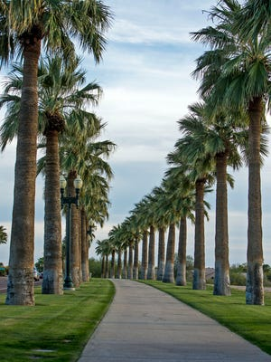 Palm trees line the sidewalk near North Lake in the Estrella community.