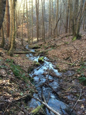 The Cranberry Creek tract in Ashe County was recently purchased by the Conservation Trust for North Carolina and the Blue Ridge Conservancy, to be transferred to the Blue Ridge Parkway.