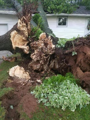Uprooted trees fell on a house in Nekoosa during storm on July 21.